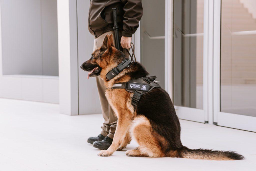 Unidad Canina K9 de Grupo Control